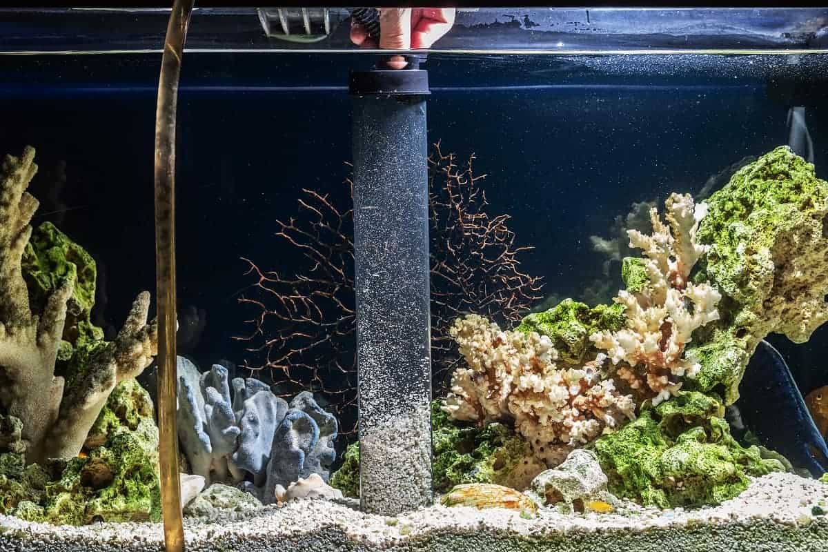 How To Clean Gravel And Substrate In A Fish Tank Aqua Life Hub